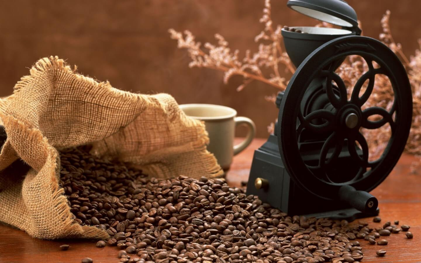 How to Choose the Best Coffee Grinder 2021